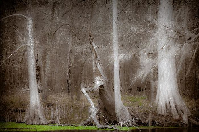 Ghost Trees by Jo Ann Tomaselli